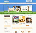 ジャックラッセルテリアブリーダー直営の子犬販売「ステップペット」